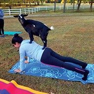 Goat yoga at Jameson Woods Farm