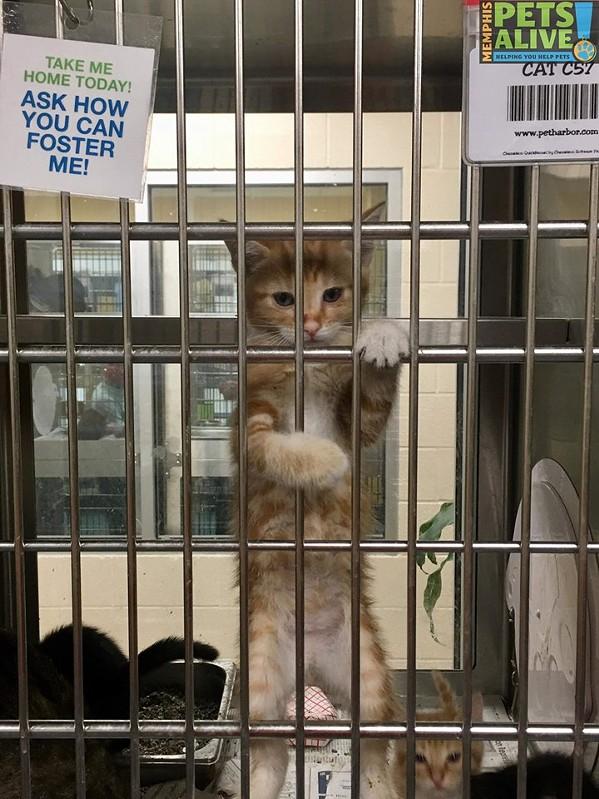 kittykat2.jpg