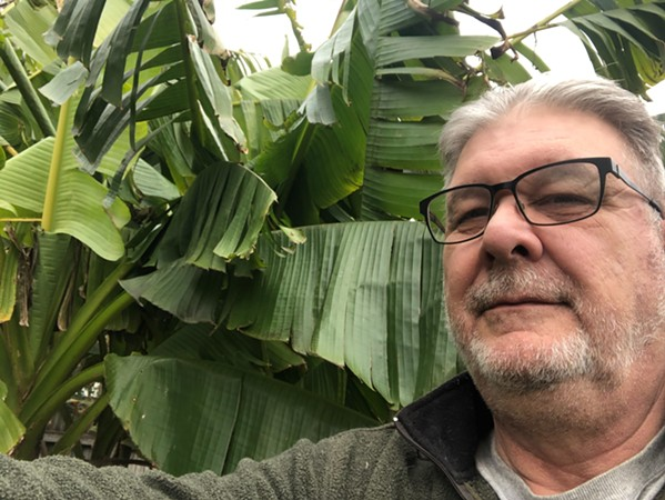 Clark Hooser and his banana trees.