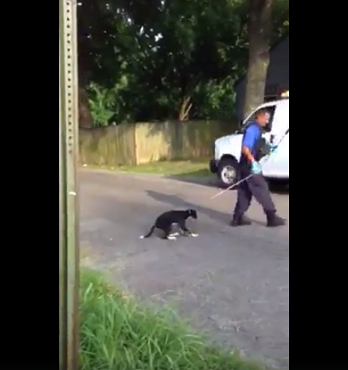 Screenshot from the viral video of a MAS officer dragging a puppy