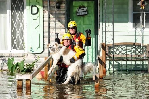 A FEMA crew pulls a dog from a Florida home after Hurricane Matthew passes through. - FEMA