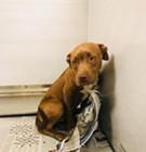 Memphis Pets Alive (March 22-28)