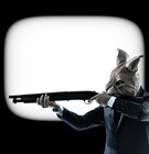 Guns & Bunnies: What's Really on the News in Memphis?