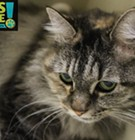 Memphis Pets of the Week (June 22-28)