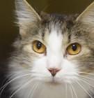 Memphis Pets of the Week (June 29-July 5)