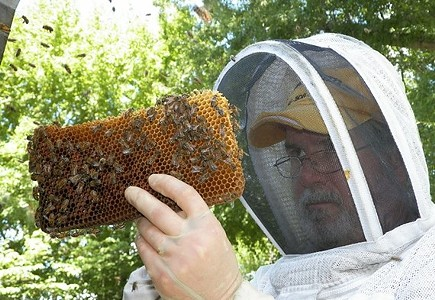 Bees: Our Pollinator