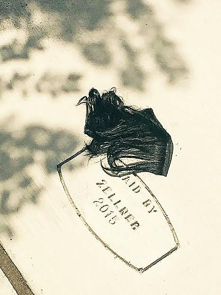 flyby_hair.jpg