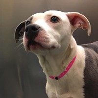 Memphis Pets of the Week (May 10-16)
