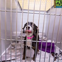 Memphis Pets of the Week (Feb. 23-March 1)