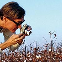 Flower Power: Eggleston, Steinkamp Exhibition Blooms at the Dixon