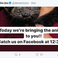 Coronavirus: Zoo to Bring 'Virtual Wild Encounters' to Aid Social Distancing