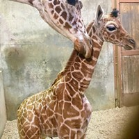 Ja Raffe was born last Tuesday, November 10th.