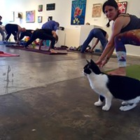 Downward Cat: Yoga With Kitties