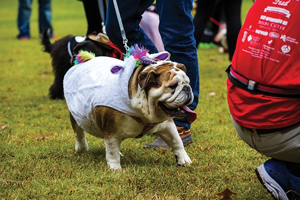 The canine krewe's bacchus ball heads to Overton Park for Mardi Growl. - MELISSA MCMASTERS