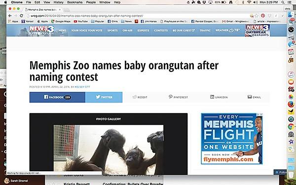 flyby_zoo.jpg