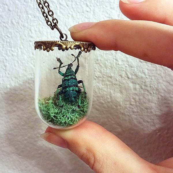werec_insectsy2.jpg