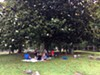 A party of picnickers beneath the magnolias at Elmwood Cemetery