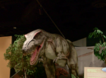 Scenes of the Dinosaurs