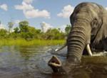 <i><b>Wild Africa</b></i> 3D