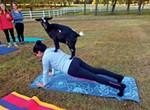 Goat yoga at Jameson Woods Farm