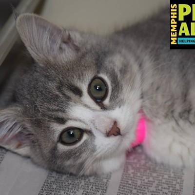 Memphis Pets of the Week (Jan. 11-17)