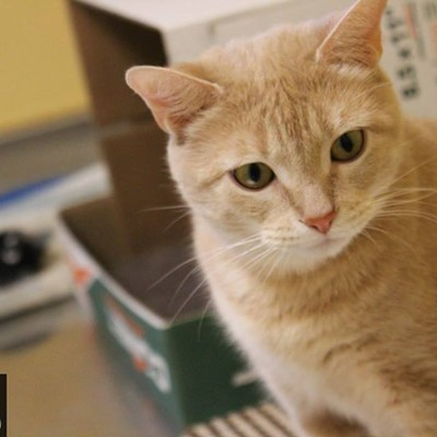 Memphis Pets of the Week (March 15-21)