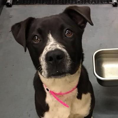 Memphis Pets of the Week (May 10-16)