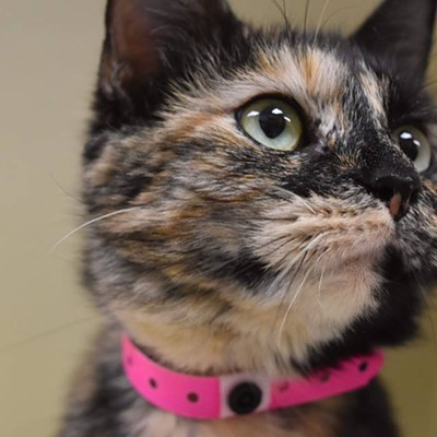 Memphis Pets of the Week (June 14-20)