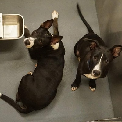 Memphis Pets of the Week (August 9-15)