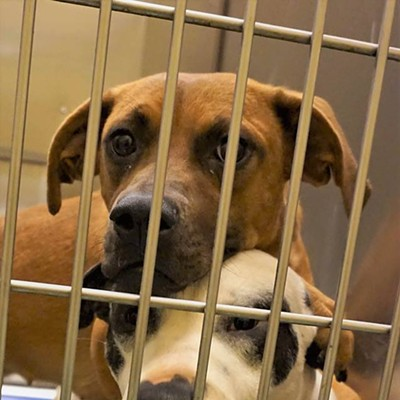 Memphis Pets of the Week (Aug. 30-Sept. 5)