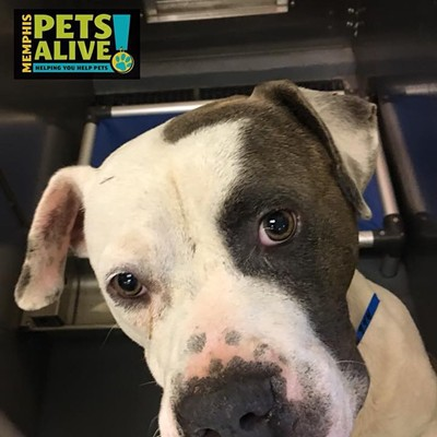 Memphis Pets of the Week (Sept. 6-12)