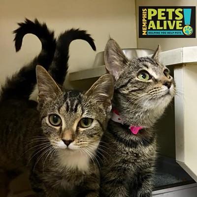 Memphis Pets of the Week (Nov. 1-7)
