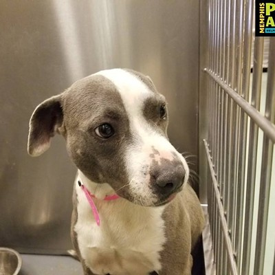 Memphis Pets of the Week (March 21-27)