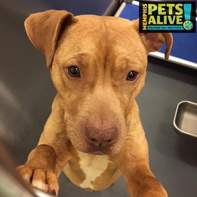 Memphis Pets of the Week (April 11-17)
