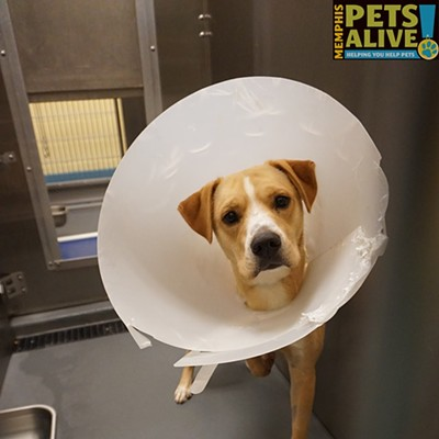 Memphis Pets of the Week (May 30-June 5)