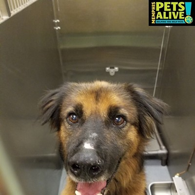 Memphis Pets of the Week (9/3-9/9)