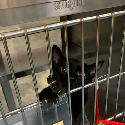 Memphis Pets of the Week (12/10/19-12/16/19)