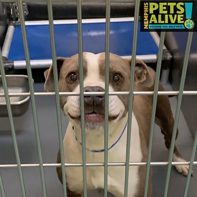 Memphis Pets of the Week (12/31/19-1/6/20)
