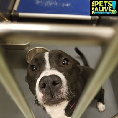 Memphis Pets of the Week (2/4/20-2/10/20)
