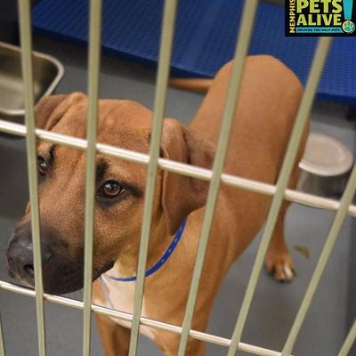 Memphis Pets of the Week (June 30-July 6)