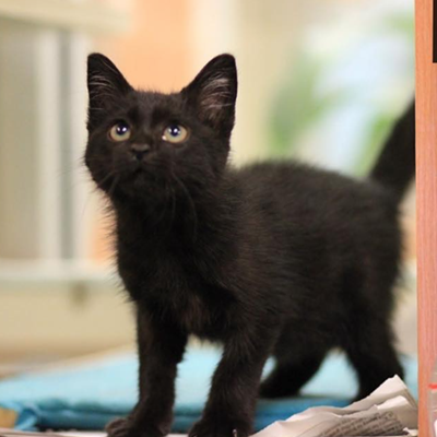 Memphis Pets of the Week (June 30-July 6)
