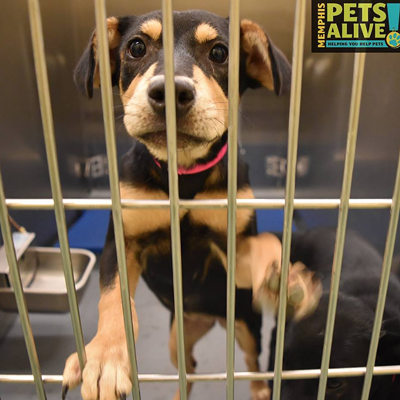 Memphis Pets of the Week (July 14-20)