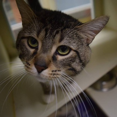Memphis Pets of the Week (Jan. 5-11)