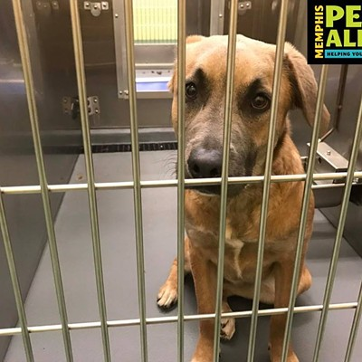 Memphis Pets of the Week (Jan. 12-18)