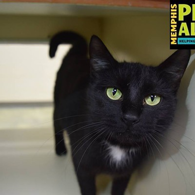 Memphis Pets of the Week (Feb. 9-15)