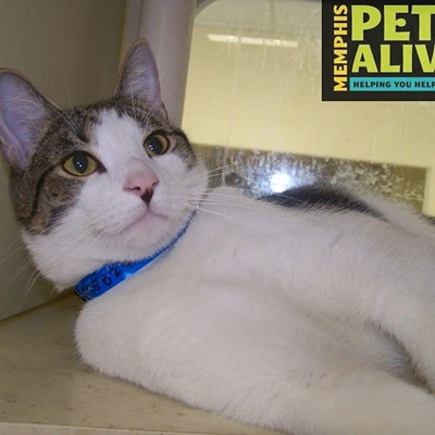 Memphis Pets of the Week (May 11-17)