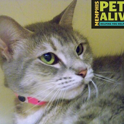 Memphis Pets of the Week (May 24-31)
