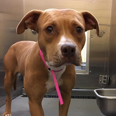 Memphis Pets of the Week (Aug. 3-9)