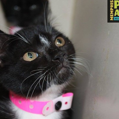 Memphis Pets of the Week (Aug. 10-16)