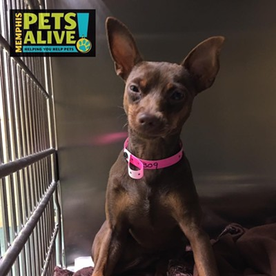 Memphis Pets of the Week (Oct. 5-11)